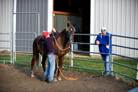 Day 2 - Richie Wingfield Natural Horsemanship Clinic